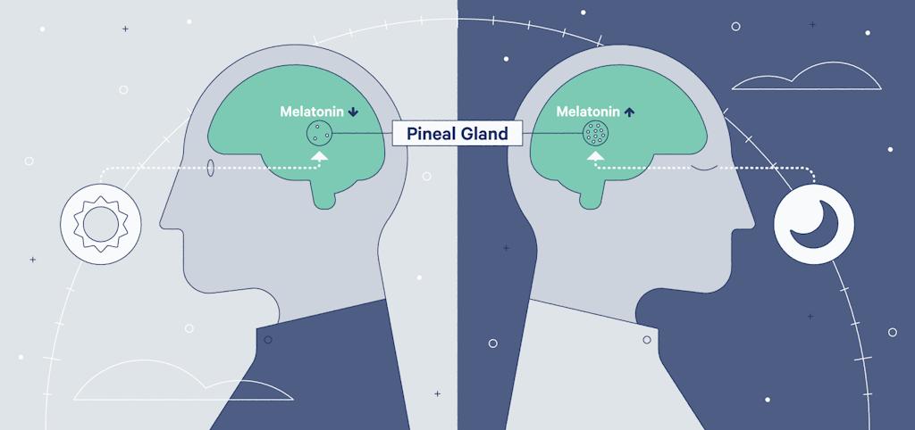 How does melatonin work